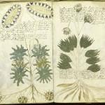 異世界への扉 100年以上解読されないヴォイニッチ手稿の謎